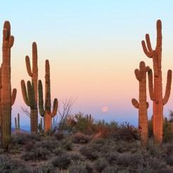 cactus qui regardent le coucher de soleil
