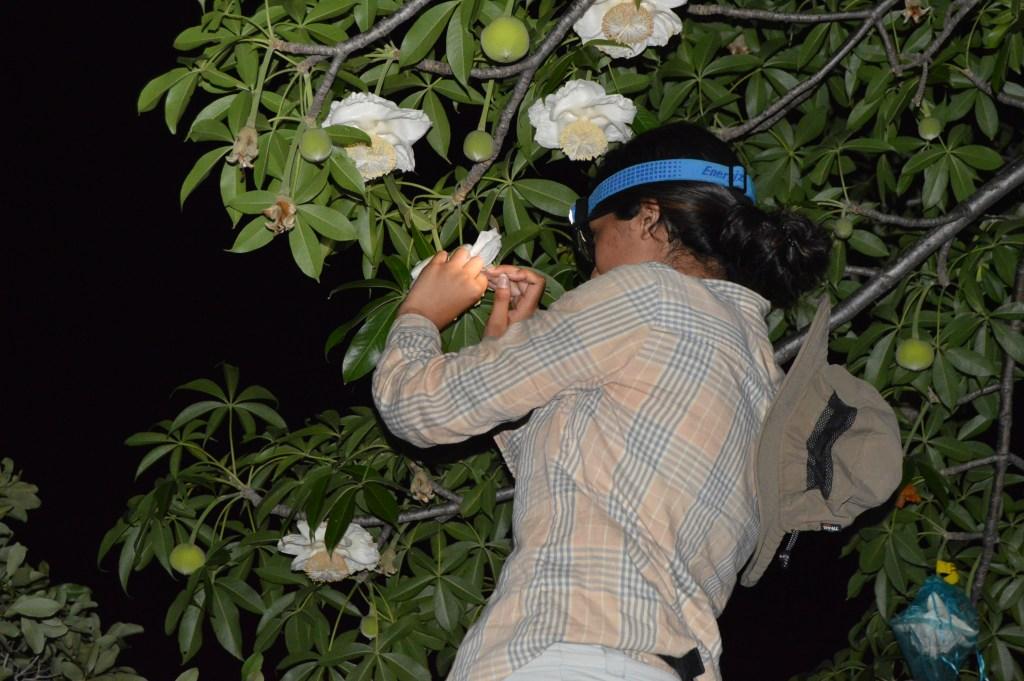 BR1 Pollination Research - Ana Chetty