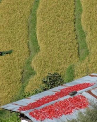 Rizières et piments séchant sur un toit au Bhoutan - blog Bar à Voyages