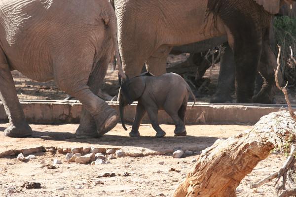 Bébé éléphant en Namibie - blog Bar à Voyages