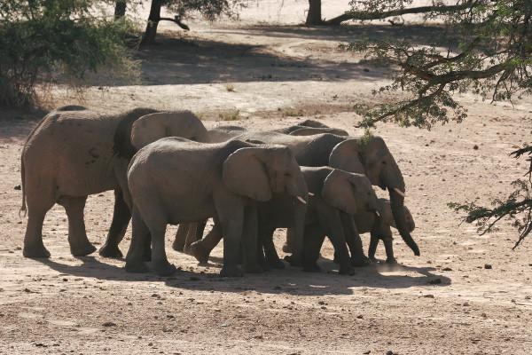 Famille d'éléphants - blog Bar à Voyages