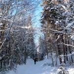 Balade dans le parc naturel de la Jacques Cartier - Québec