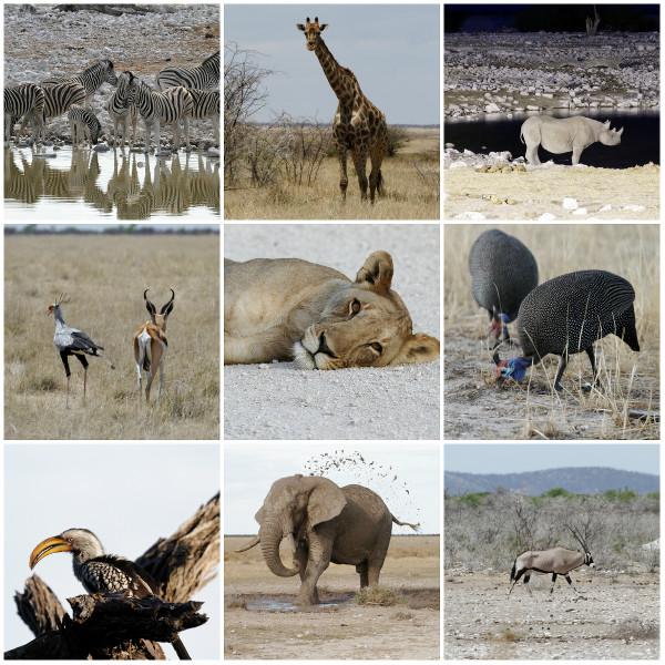 Etosha-Namibie-blog-bar-a-voyages