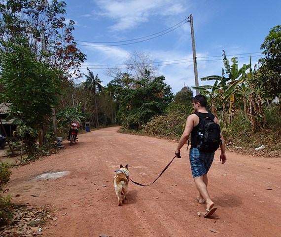 Promenade chiens