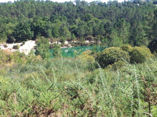paysage de forêt, d'ajoncs et un lac