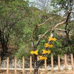 Choisis ta direction dans la Serra da Capivara ©Felipe Mendes