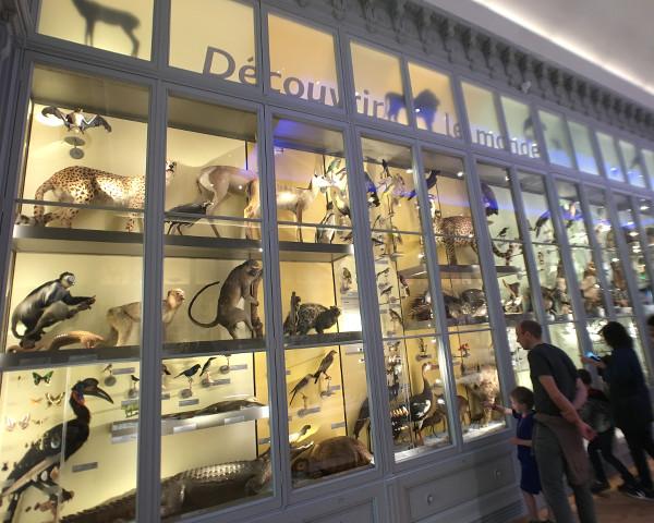 Vitrines avec des animaux au Muséum de Bordeaux