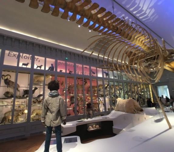 mannequin pour représenter l'Homme au Muséum de Bordeaux