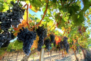 vino biodinamico bar.it