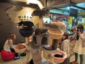 Un bar per gatti esiste anche a Tokyo