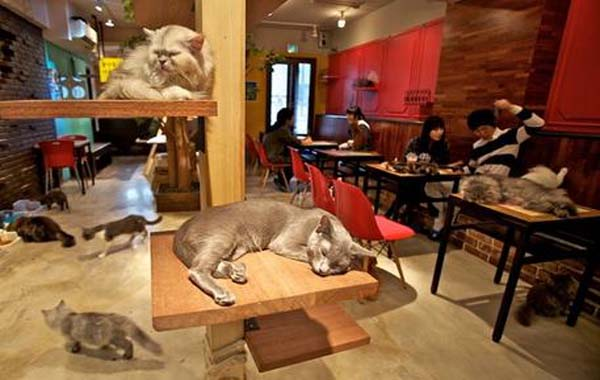 gatti al bar bar.it