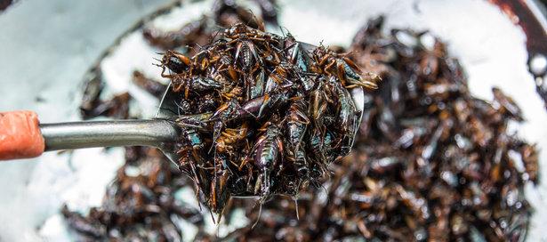 alimentazione con insetti bar.it