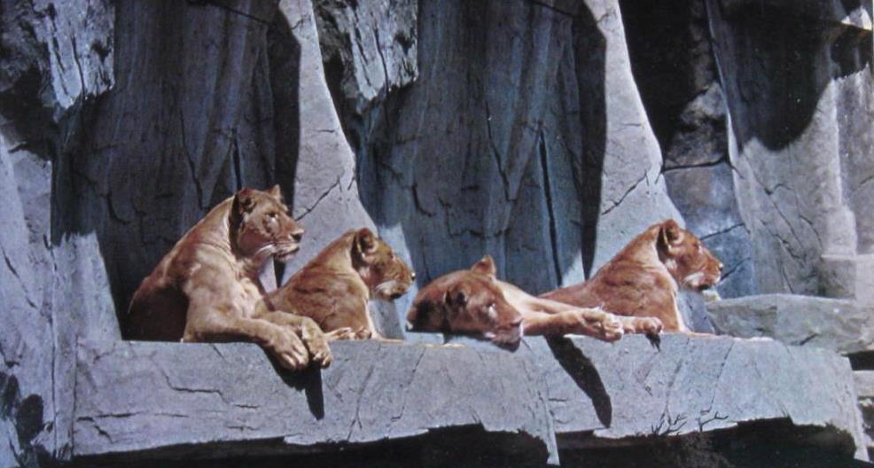 כפירי אריות