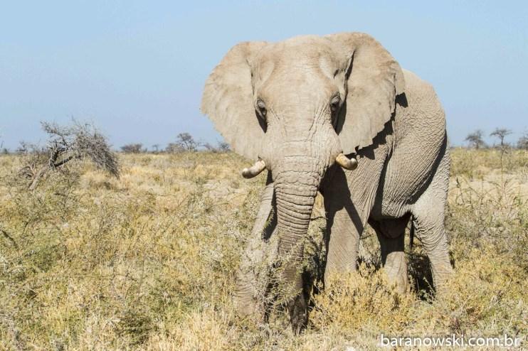 Namíbia - Parque Nacional Etosha