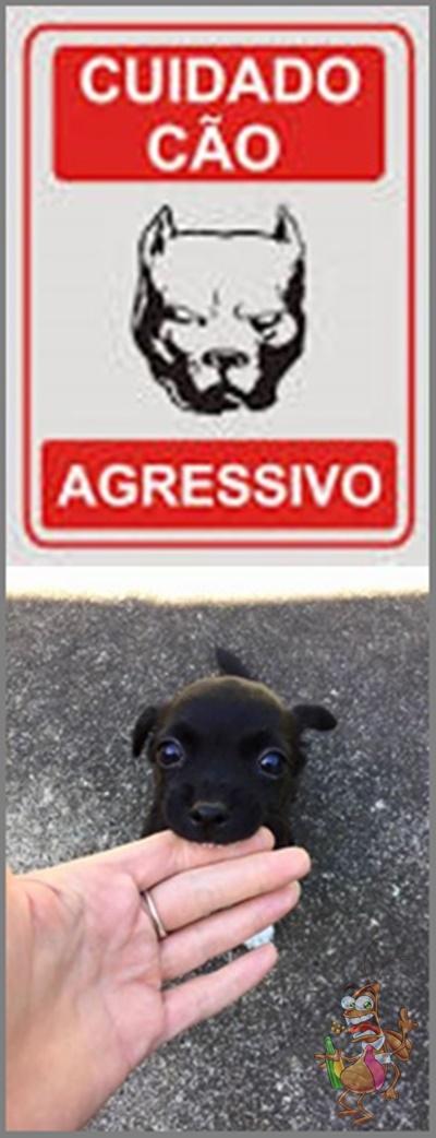 Cuidado: cão bravo