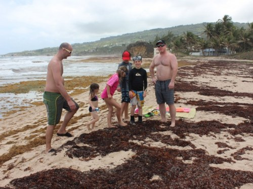 Tourists at East Coast experiencing what  it is like to walk on the Sargassum seaweed.
