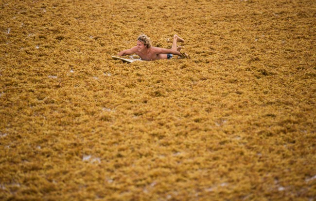 Paddling seaweed