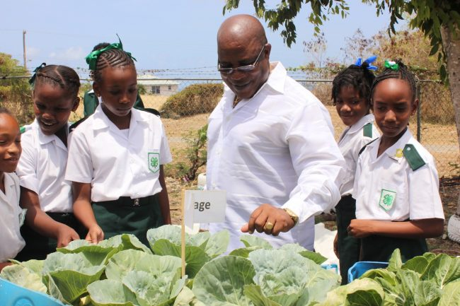 Minister of the Environment Dr Denis Lowe expressing his delight with these cabbage plants, as members of the 4-H Club who helped to plant them look on.