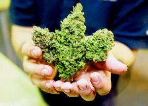 The marijuana market is budding.