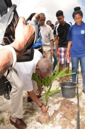 President David Granger planting a tree on Merriman Mall.
