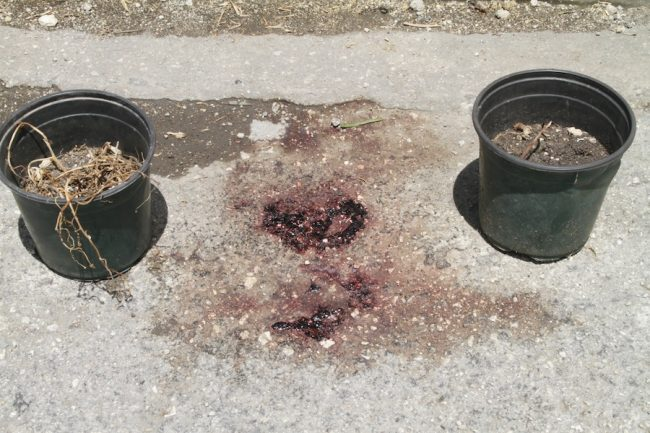 These plant pots and blood stains mark the spot where Scherno Ricardo Rose died last night.