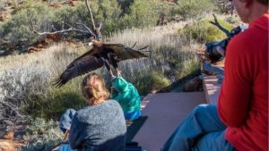 An eagle attempted to lift a little boy into the air during a bird show at Alice Springs in Australia.