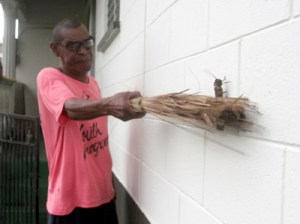 Kenn Rodd swats a locust at his Lewis Street, Point Fortin home on Tuesday.