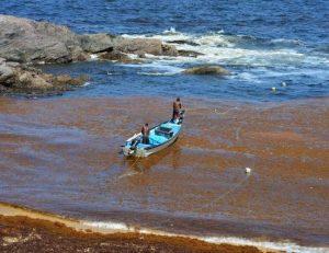 Seaweed off the coast at Matura Village on Trinidad's northeast coastline.