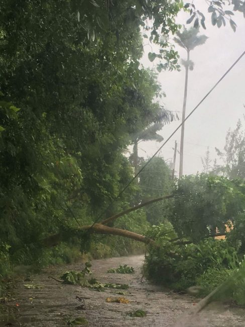 A downed tree at Wakefield, John during today's passage of the storm.