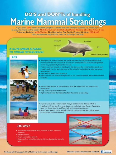 The Barbados Marine Mammal Stranding Network offers tips on how to handle a stranding.