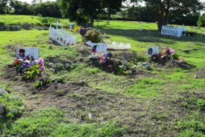 The graves of Wavenie Johnson, Shameka Shepherd and Shakira Shepherd at Bushy Park St Phillip.