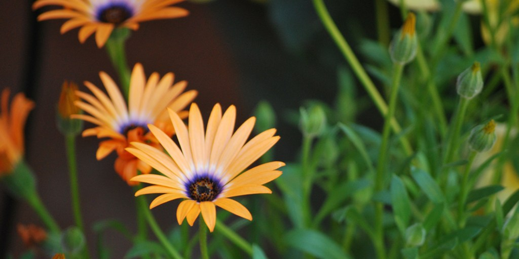 orange flowers | Barb Ann Designs |
