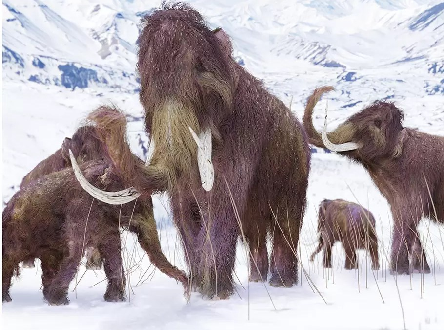 A Word from the Mammoths…