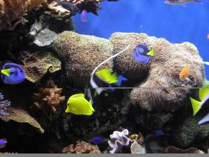Underwater-Ocean-Life_HD_for_Iphone_chillcover.com_