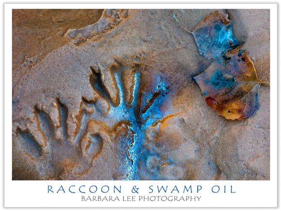 Barbara Lee Photography: Zion National Park &emdash; Raccoon Tracks and Fallen Leaf on Swamp Oil Creek - Zion National Park