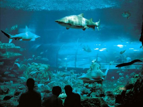 sharks in aquarium barcelona
