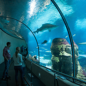 aquarium_barcelona