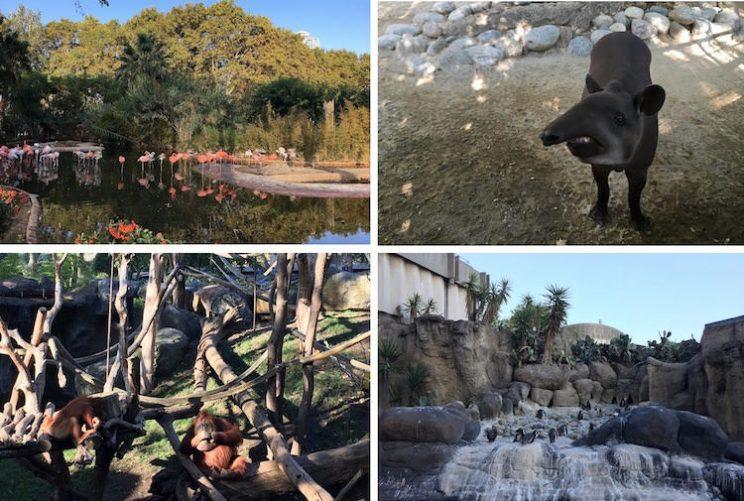 barcelona zoo dieren