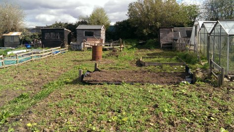 Our Allotment - from fence to fence (the greenhouses aren't ours)