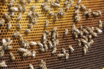 my bucket list - learn about beekeeping