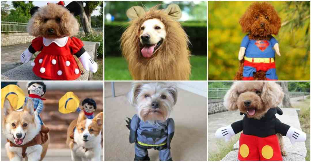 adorable dog costumes