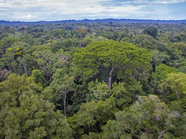 View tower la Selva Jungle Lodge