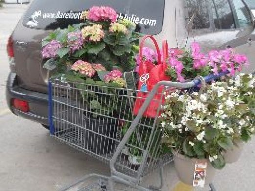 Julies Cart at Lowes_small