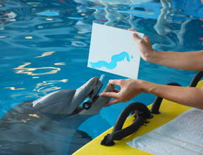 Favorites To Do:  The Clearwater Marine Aquarium