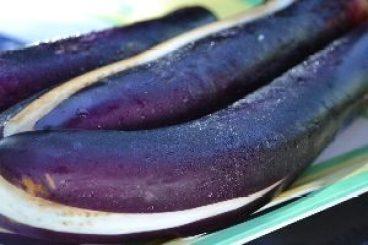 Japanese eggplant_small