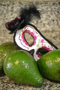 our-florida-avacados_small