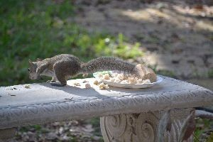 snatch and grab squirrel_small