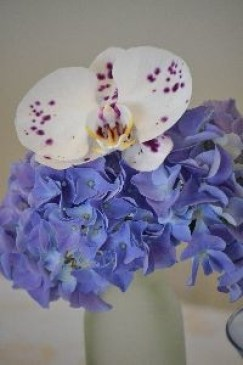 2 pretty blossoms_small