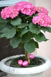 Easter egg pink_small
