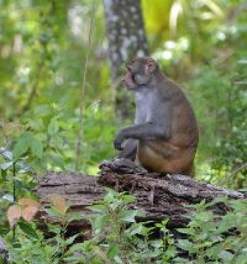 My favorite monkey_small